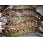 Frozen seafood shrimps