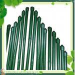 Plastic Coated Bamboo Cane