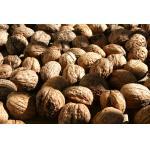 Almond Nuts | Apricot | Betel Nuts | Brazil Nuts | Cashew Nuts