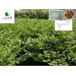 Giant Knotweed Extract(sales05@3wbio.com)
