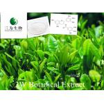 Green Tea Extract(sales05@3wbio.com)
