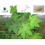 Sweet tea Leaf Extract(sales05@3wbio.com)