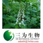 high quality  Orthosiphi Herb extract (sales04@3wbio.com)