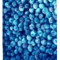 Blueberry Anthocyanin