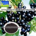 Black Currant Extract(5%-70% Anthocyanin)