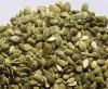 pumpkin seed kernels GWS