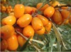 New season Chinese frozen seabuckthorn exporters