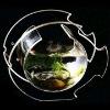 Exquisite Acrylic Fish Aquarium
