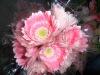 Fresh Cut Flowers--Gerbera--Honey
