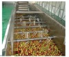 apple juice production line
