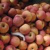 fresh good taste red fuji apple