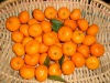 Chinese mandarin orange