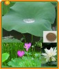pure Natural Nelumbo nucifera Gaertn Extract