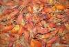 Herbal medicine:Cape Jasmine