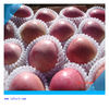 fresh apple fruit price buy apple products wholesale