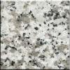 China Grey granite guangdong white G439-C granite tile