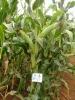 Bio Liquid fertilizer