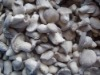 sell frozen baby oyster mushroom