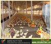 Automatic chicken equipment for poultry broiler
