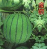 Emerald hybrid watermelon seed