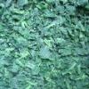 frozen spinach pieces