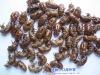 1-19 Periostracum Cicadae for cough