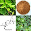 100% pure natural Ivy extract powder