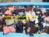 high efficient recycling okd textile fiber cutter 008615838257928
