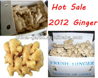 China Price of Ginger