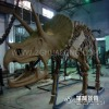 009 The duplication Triceratops Duplicate of Dinosaur skeleton