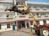 log crane