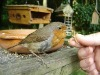 Premuim Dried Mealworms for Your Wild Birds