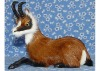 Animal Design Gifts Antiques Collectibles