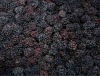 Fresh Quick-frozen blackberry