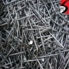 galvanized/polish common nails(supplier)
