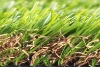 Popular with buyers mixed turf for decoration