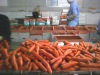 Chinese wholesale fresh carrot