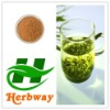 high quality of Green Tea Extract,EGCG, Tea Catechin, Green Tea Extract powder
