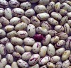 Light Speckled Kidney Beans American Round Shape