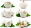 2012 new crop seasonable fresh garlic in various of size and packing with good price and payment