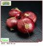 7-10cm 2012 New Season Crop Fresh Shandong red onion
