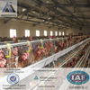 galvanized egg production battery chicken cage for 90 96 120birds