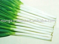 Fresh Green Chinese Onion