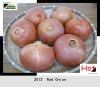 2012 New Crop Fresh shandong red onion