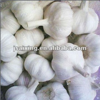 fresh normal white garlic 2012