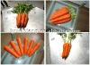 fresh wholesale carrot China