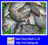 China Tilapia Fish Fully Cleaned