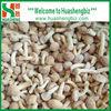 IQF Frozen pholiota nameko mushroom