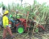 sugarcane harvest machine in Brazil Demo