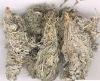 Virgate Wormwood Herb Capillary Wormwood Herb